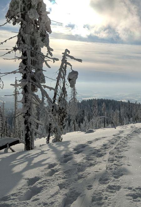 Dywynydnyfar winter 6e13ded8 2tks