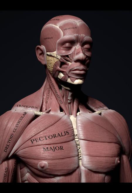 Farzinizadyar human anatomy kit ef906e31 n1ye