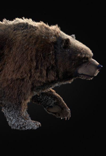 Lenabelmonte bear instinct short  b278a069 kr4n