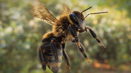 A bee 3D