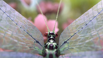 A Lacewing