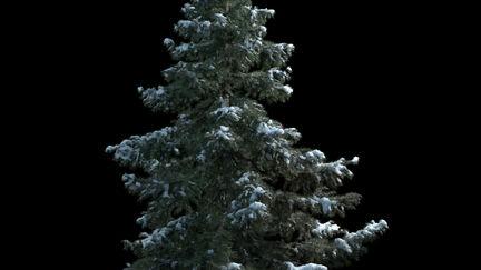Snow tree Test