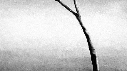 Tree - black and white