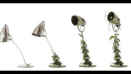 Growing lamp