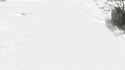 CG Road Snow