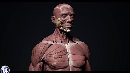 Human Anatomy Kit