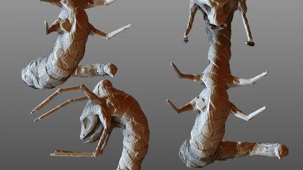 Bestiarium Snakespider
