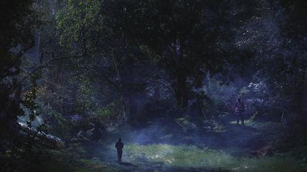 Forest Glade Dusk