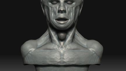 Anatomy sculpting