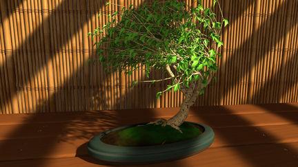 Bonsai Scene