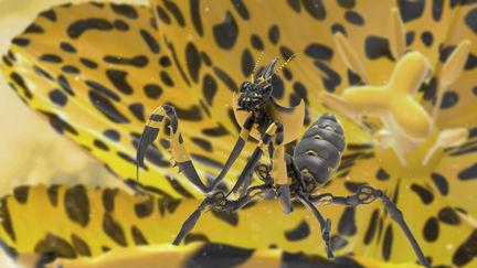 devil-flower-mantis