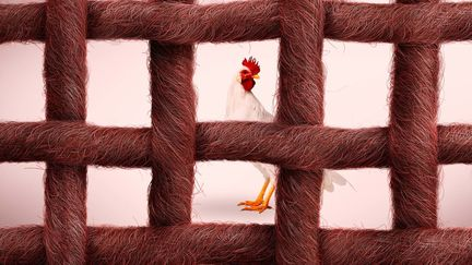 Chicken_Ropes