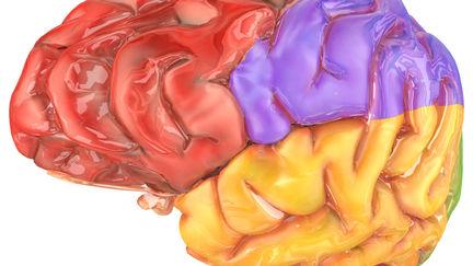 Human Brain (schematic)