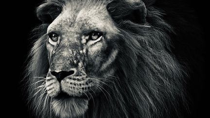 Lion's head.