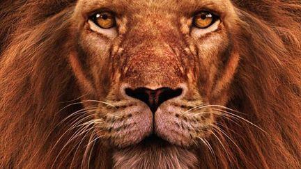 Lion's head (color version)