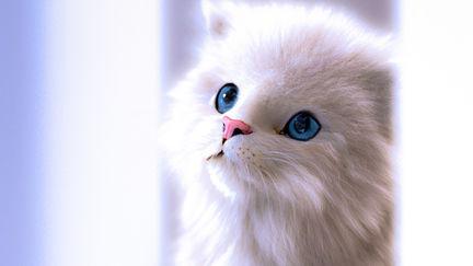 White Kitten/2