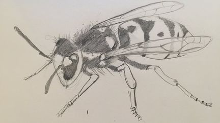 Observational drawing #2, Wasp
