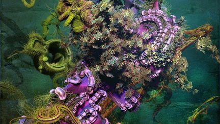Violet Corals