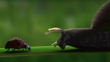 Snail & Ladybug