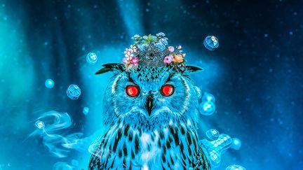 Sapphire Owl