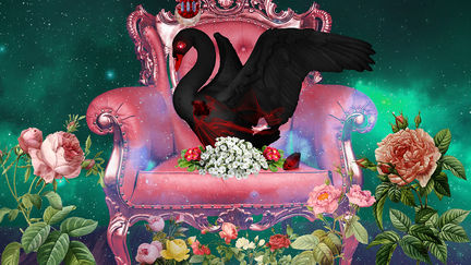 The Dying Black Swan