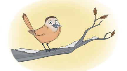 Winter Birdy
