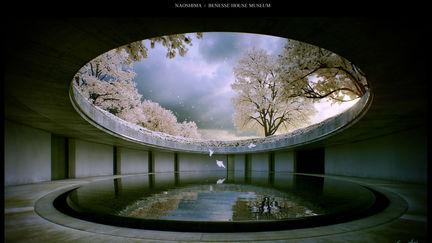 Naoshima - Cherry Blossom