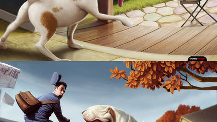 Coaching-Canin