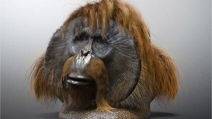 Orangutan by TITI (WIP 01)