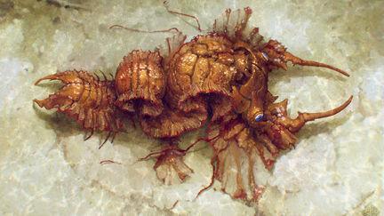Crustacea
