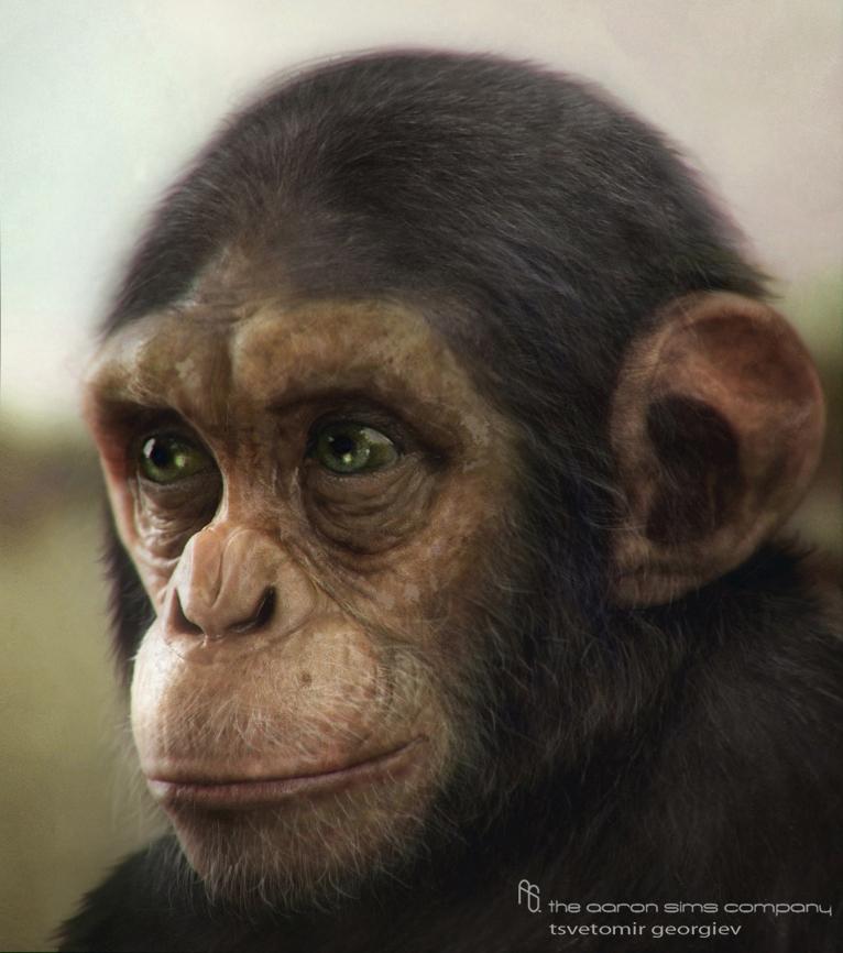 Ceco chimp4 1 eff9f5e4 czmi