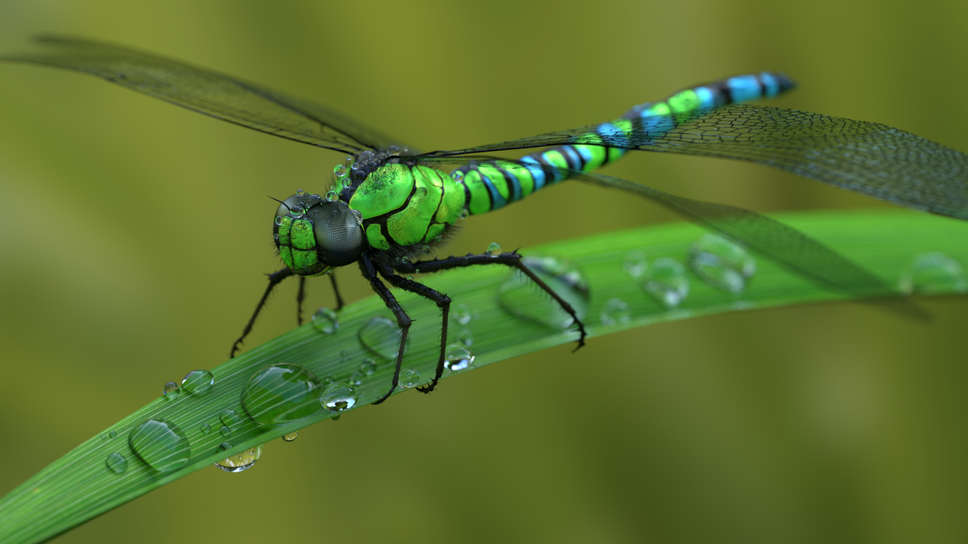 Frequenzlos dragonfly 1 43929a4a nq9z