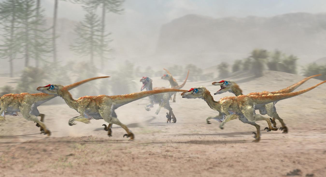 Japa2 velociraptor pack 1 c7392316 kvxr