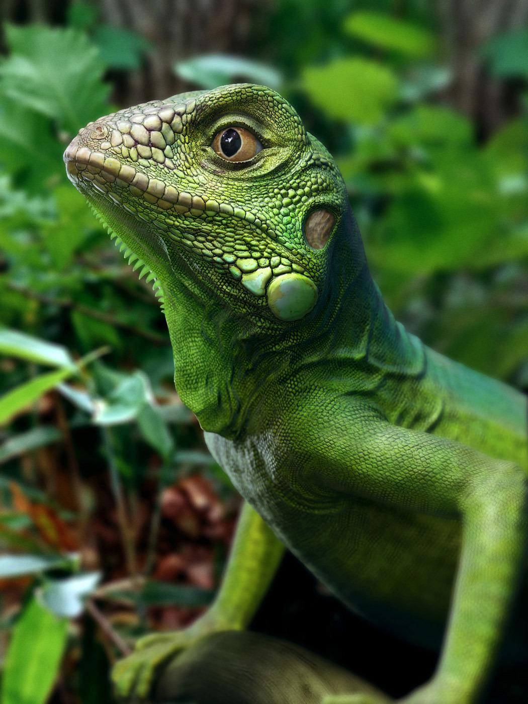 Lixiaodong green iguana dong808 1 1d185885 zkxy
