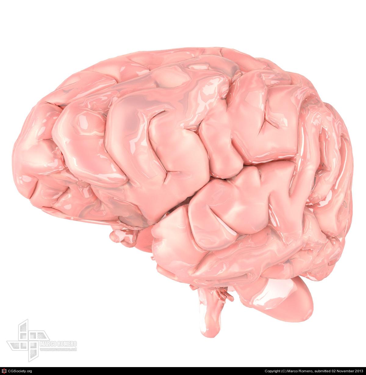 Maromero human brain 1 ee572c21 5qv0