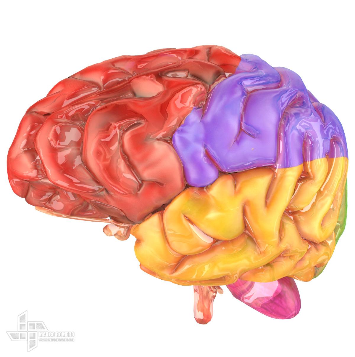 Maromero human brain schemati 1 e48eb481 1mg2
