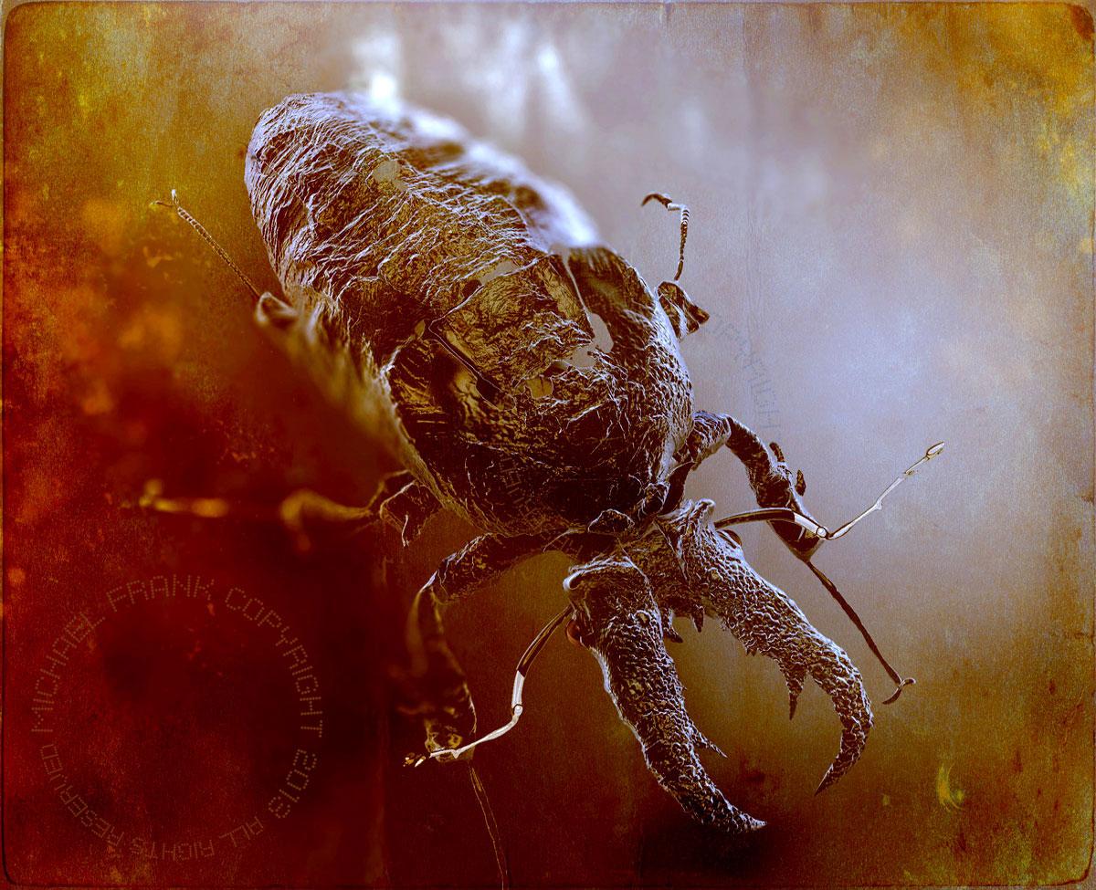 Michaelfrank600 stag beetle shell 1 a3b167be 0cjc
