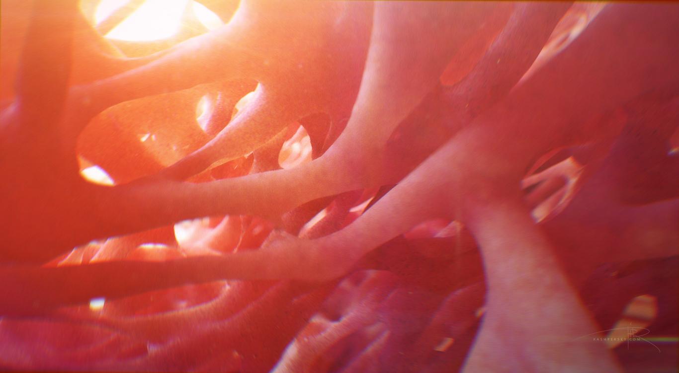 Mrriddick bone cross section f 1 802e00ab dysj