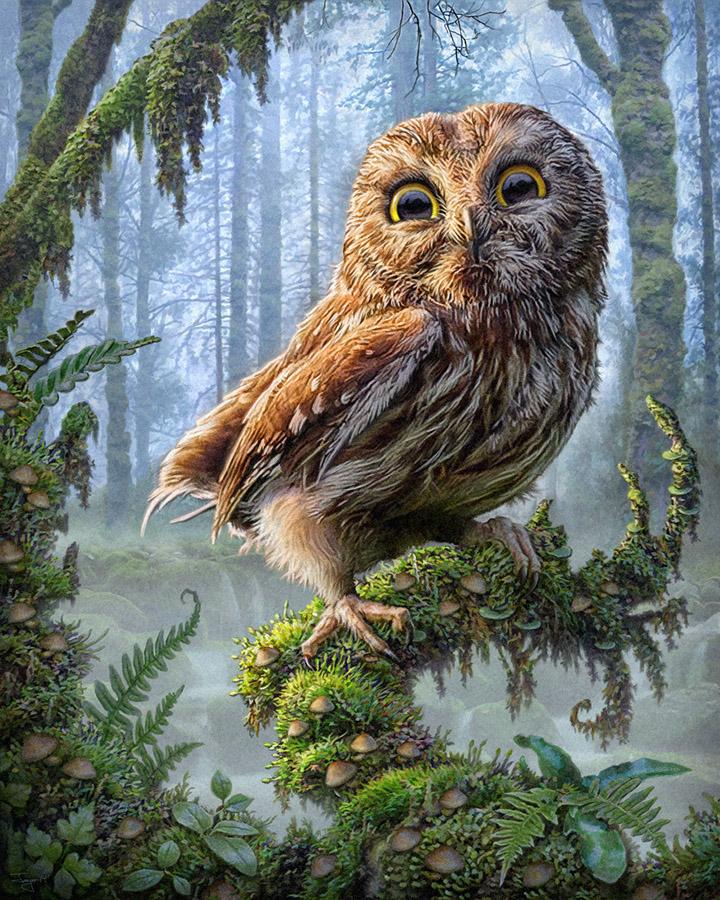 Philjaeger owl perch 1 a0f287de 3tpv
