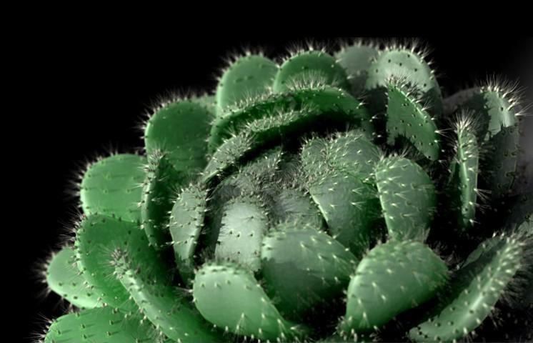 Ptakun cactusos 1 8348c9e5 4vc2