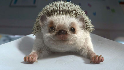 Elite - Hedgehog