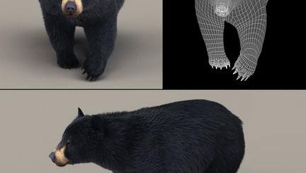 Black bear - walk animation test
